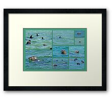 Gray Seals at Chatham - Cape Cod Framed Print