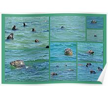 Gray Seals at Chatham - Cape Cod Poster