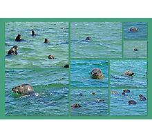 Gray Seals at Chatham - Cape Cod Photographic Print