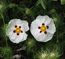 Like Two Peas in a Pod - Rock Roses by BlueMoonRose