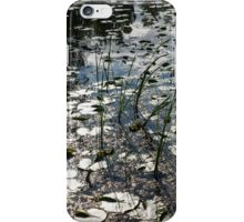 Glossy Silver and Green - Waterlily Pad in the Sunshine iPhone Case/Skin