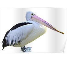 Pelican on white Poster