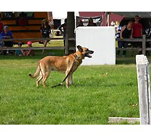 police dog Photographic Print