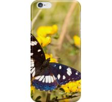 Southern White Admiral butterfly (Limenitis reducta) iPhone Case/Skin