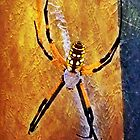 Painted Garden Spider by Lisa Taylor