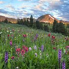 Colorado Wildflower Images - Morning at Butler Gulch along the Continental Divide 3 by RobGreebonPhoto