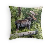 RMNP Bull Moose Throw Pillow