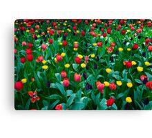 Tulips @ Keukenhof Canvas Print