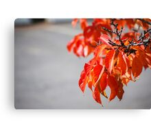 Autumn coloured leaves on a tree Canvas Print