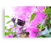 Grecian in the pink Canvas Print