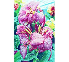 Canna Lily with Water Drops Photographic Print