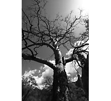 Dying Tree Photographic Print
