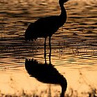 Solitary Sandhill Silhouette by ruth  jolly