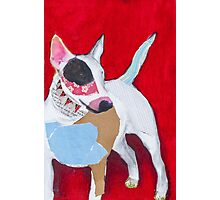 Red the English Bull Terrier Photographic Print