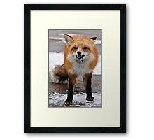 Goofy Fox Framed Print
