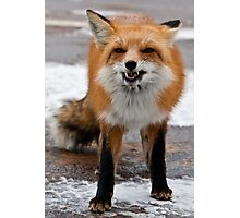 Goofy Fox Photographic Print