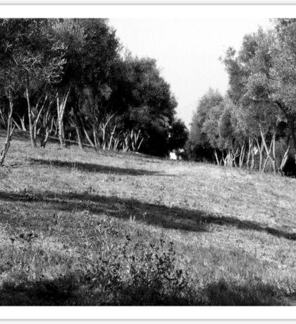 Black And White Landscape 1 Sticker