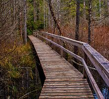 Smuggler Cove Boardwalk by mspixvancouver
