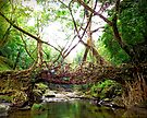Bridge created by nature by subhraj1t