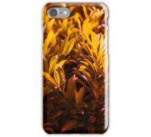 Orange Shades  iPhone Case/Skin