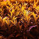 Orange Shades  by crystofurr