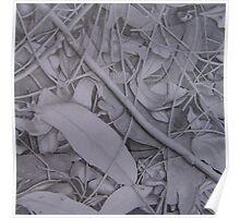 Toadlet Habitat Leaf Litter Poster