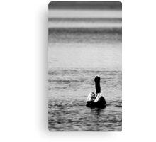 Sitting Pelican Canvas Print
