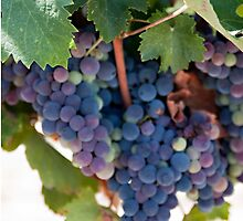 Grapes on the Vine II by Sherry Hallemeier