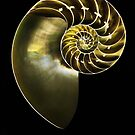 pearly nautilus by lastgasp