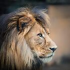 King by Craig Hender