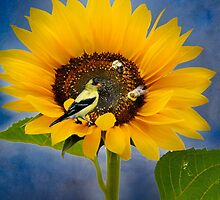 Sweet sunflower by LudaNayvelt