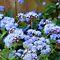 All Glorious Gardens - Purple in the Garden