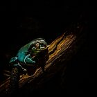 Green Tree Frog by Craig Hender