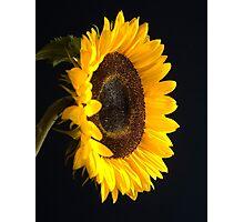Sunflowers on blue Photographic Print