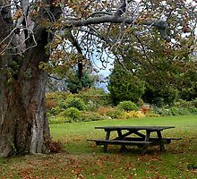 Picnic Table under an Ancient Tree by SummerJade