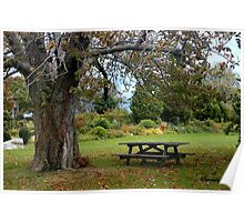 Picnic Table under an Ancient Tree Poster