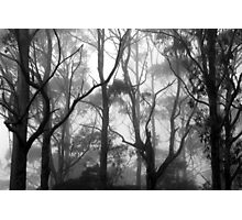 The Clearest Way into The Universe is Through a Forest Wilderness Photographic Print