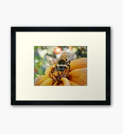 Bee My Honey Framed Print