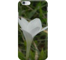 Rain Lily, Between Storms iPhone Case/Skin