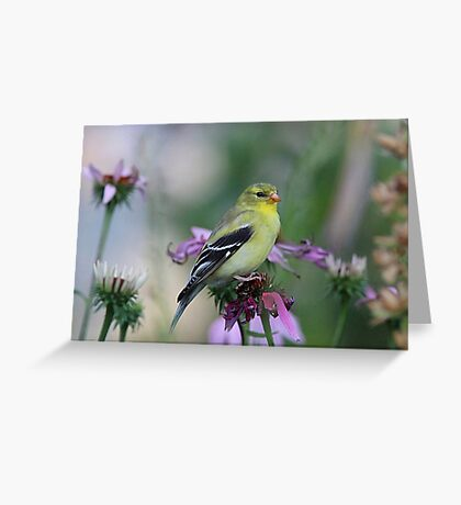 American Goldfinch - female Greeting Card