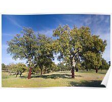 Cork oak, Monfrague Poster