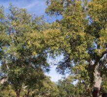 Cork oak, Monfrague Sticker