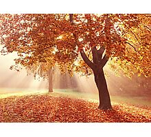 Autumn dreams Photographic Print