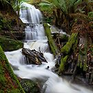 Myrtle Valley Falls - Mt Wellington -Tasmania by Anthony Davey