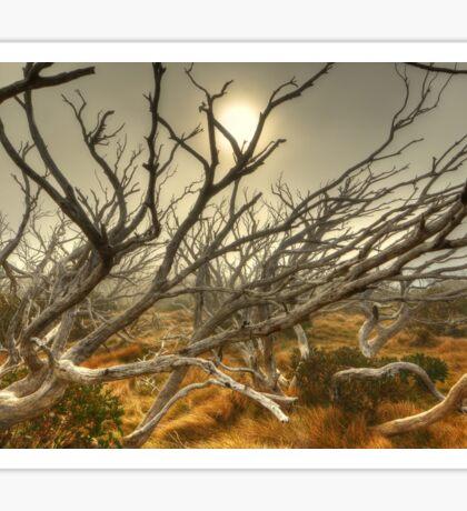 Burnt snowgum forest, The Bluff Sticker