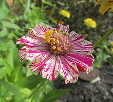 Colorful Flower by Melissa, Sue Ball