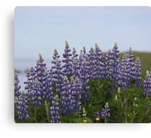 Lupine Flowers on a Cliffside Canvas Print
