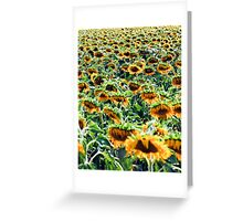 Israel, Field of yellow sunflowers Greeting Card