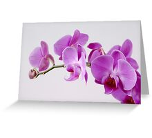 Purple Orchid on white background Greeting Card