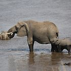 Mother and Baby Elephant, Tanzania by miaastewart